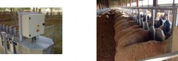 Ленточные транспортеры корма (кормовые ленты)